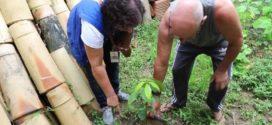 Combate ao Aedes aegypti é intensificado em Volta Redonda