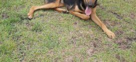Internauta procura por cachorra desaparecida em Volta Redonda