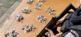 Mais de 300 trouxinhas de maconha são apreendidas no Eucaliptal