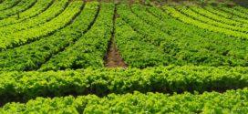 Barra Mansa realiza mapeamento sobre agricultura municipal
