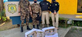 PRF flagra homem com pássaros silvestres na Dutra, em Itatiaia