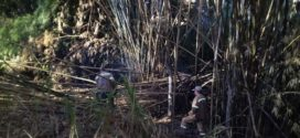 Trecho do Rio Godinho, em Barra Mansa, está sendo desobstruído