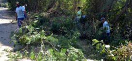 Recuperação florestal no entorno da Ilha São João é iniciada