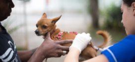 Volta Redonda terá vacinação antirrábica em nove bairros no próximo sábado