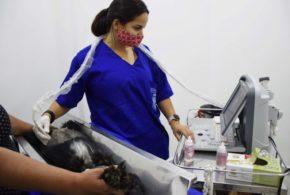 Hospital Veterinário de Resende atende mais de oito mil animais no primeiro trimestre