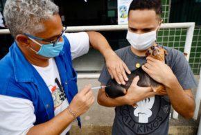 Quarta etapa da vacinação antirrábica acontece em 11 postos de VR neste sábado