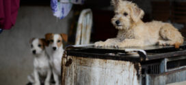 Abril Laranja: Guarda Ambiental de Barra Mansa realiza operação contra maus tratos animais