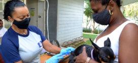 Resende terá vacinação antirrábica animal neste sábado