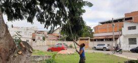 Prefeitura de Valença realiza ações de poda e limpeza na cidade