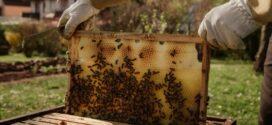 Produção de mel de abelhas movimenta R$10 milhões por ano no RJ