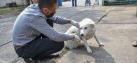 Mais de 2 mil animais são vacinados em Vacinação Antirrábica de Porto Real