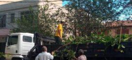 Podas preventivas de árvore são intensificadas em bairros de Volta Redonda