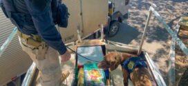 PRF apreende cerca de 3 toneladas de maconha na Dutra